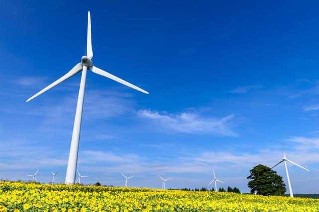 風力発電と青空と菜の花の写真
