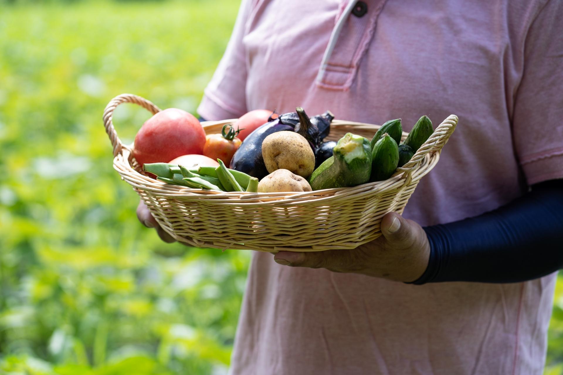 地産野菜 イメージ